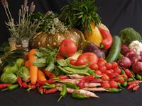 Commercial Vegetable Production Course | Online Vegetable Growing ...