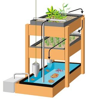 Aquaponics Online Course