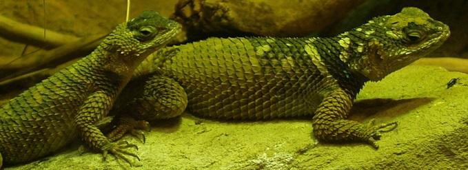 Zoology - Miami University