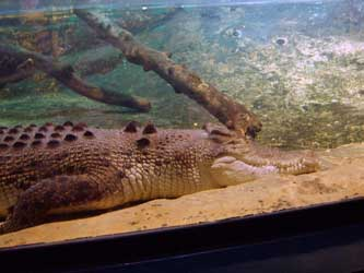 What colleges specialize in Zoology more specifically ...