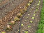 Learn about irrigation and irrigation management with an online course from ACS Distance Education