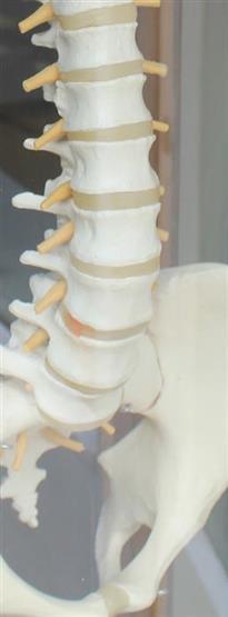 Recognising Back Injury