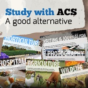 Be innovative and find opportunities in business with ACS Distance Education