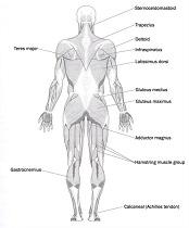 ocr human biology coursework