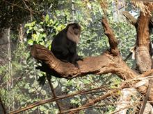 Primate Animals online course from ACS Distance Education